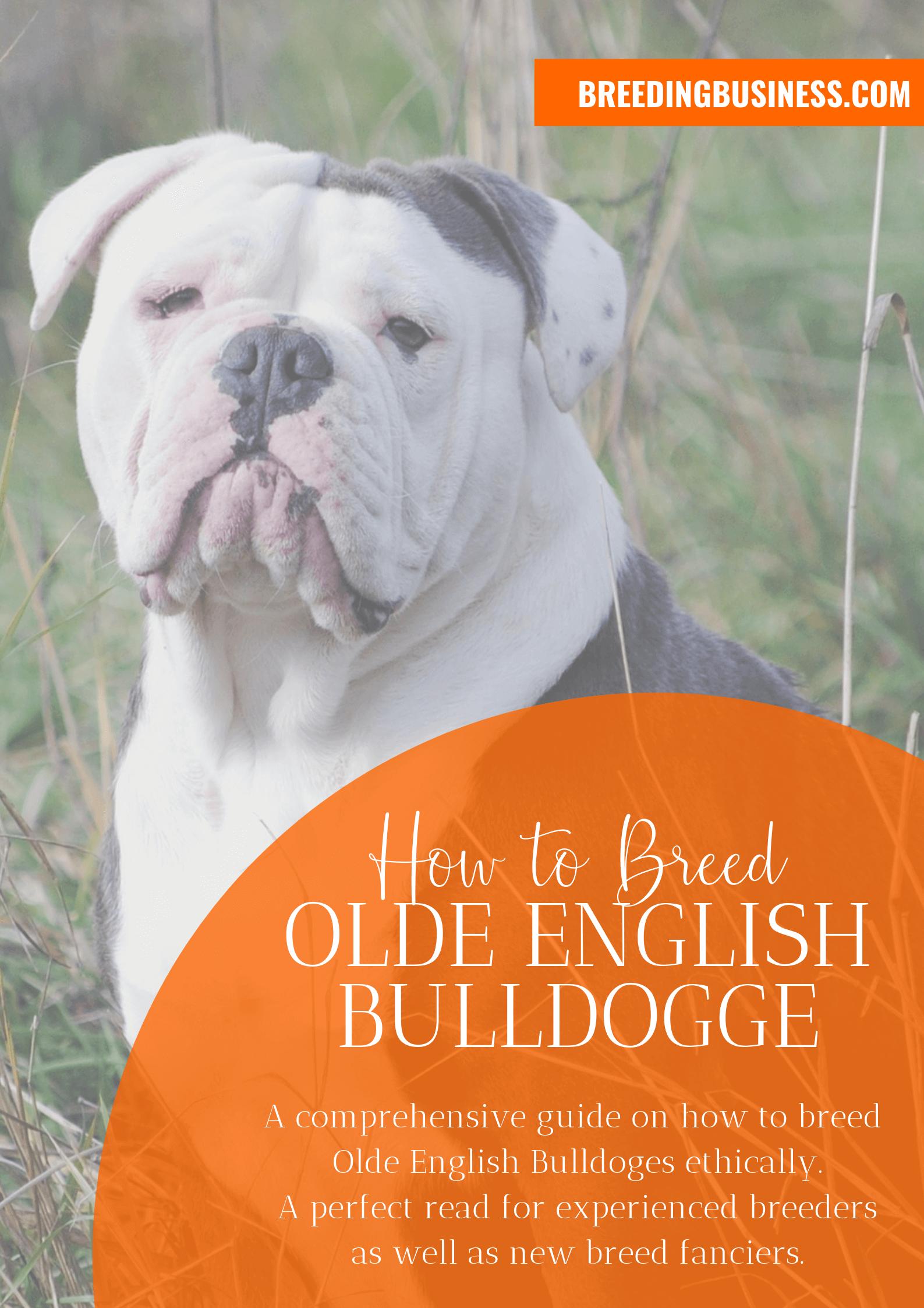 breeding Olde English Bulldogges