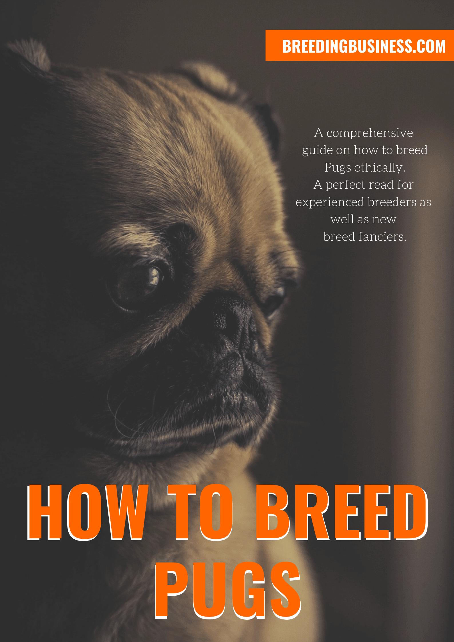 breeding Pugs