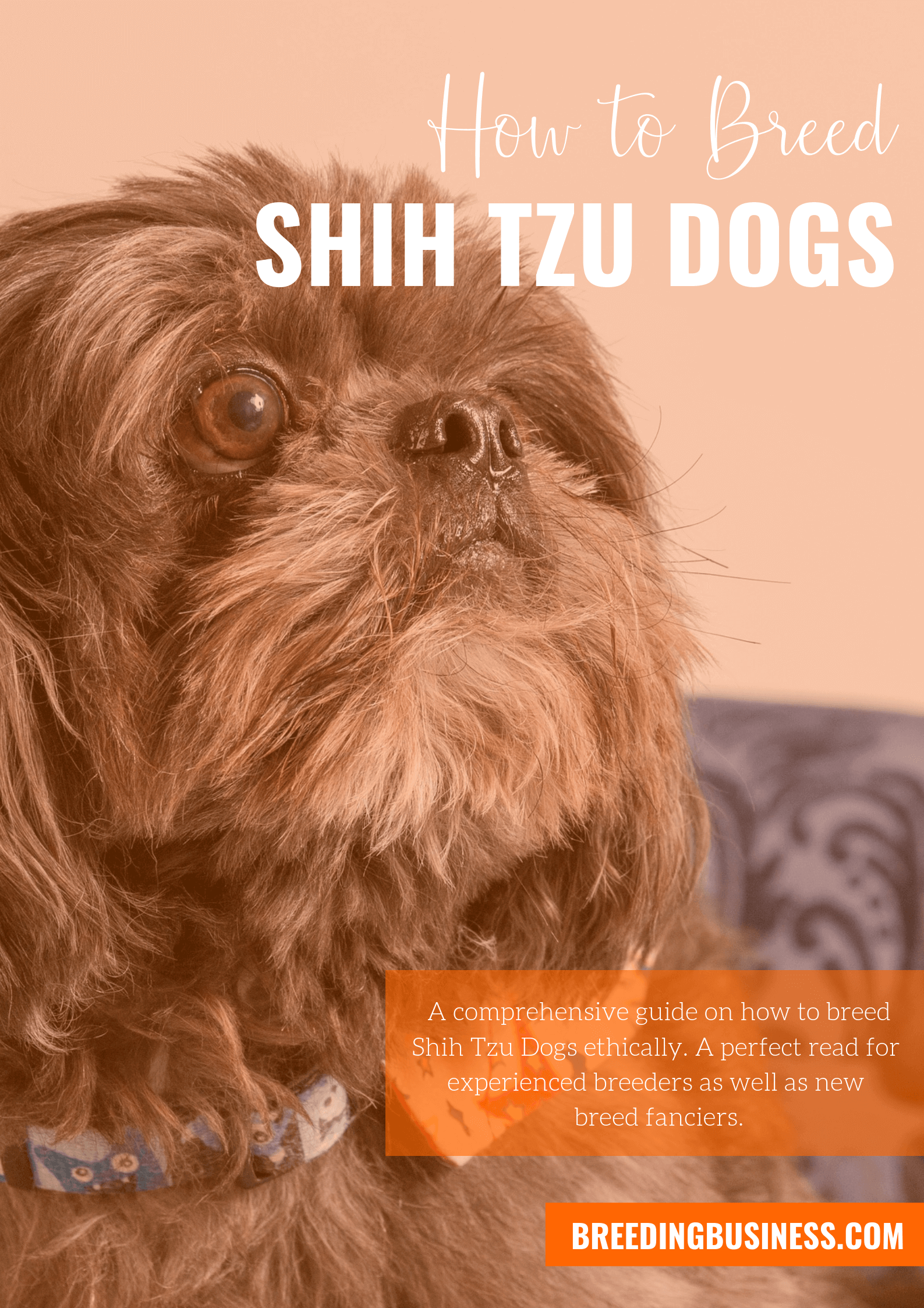 breeding Shih Tzus