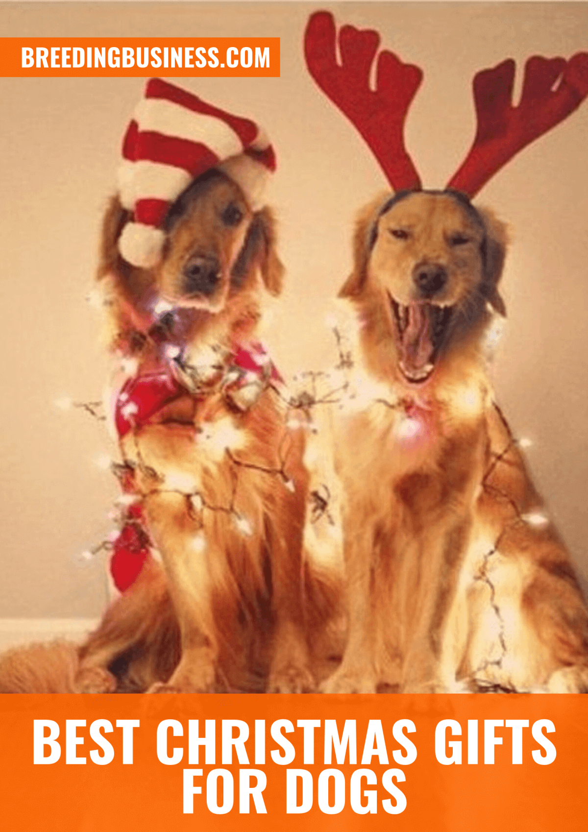 Top Christmas Gifts for Dogs