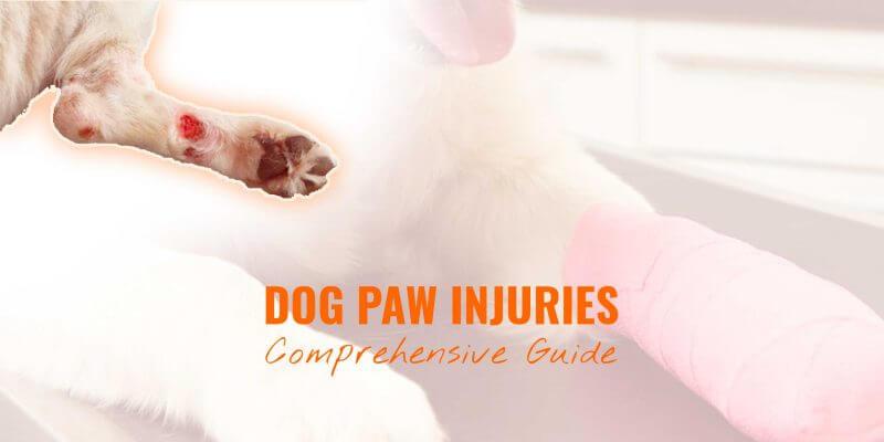 Dog Paw Injuries