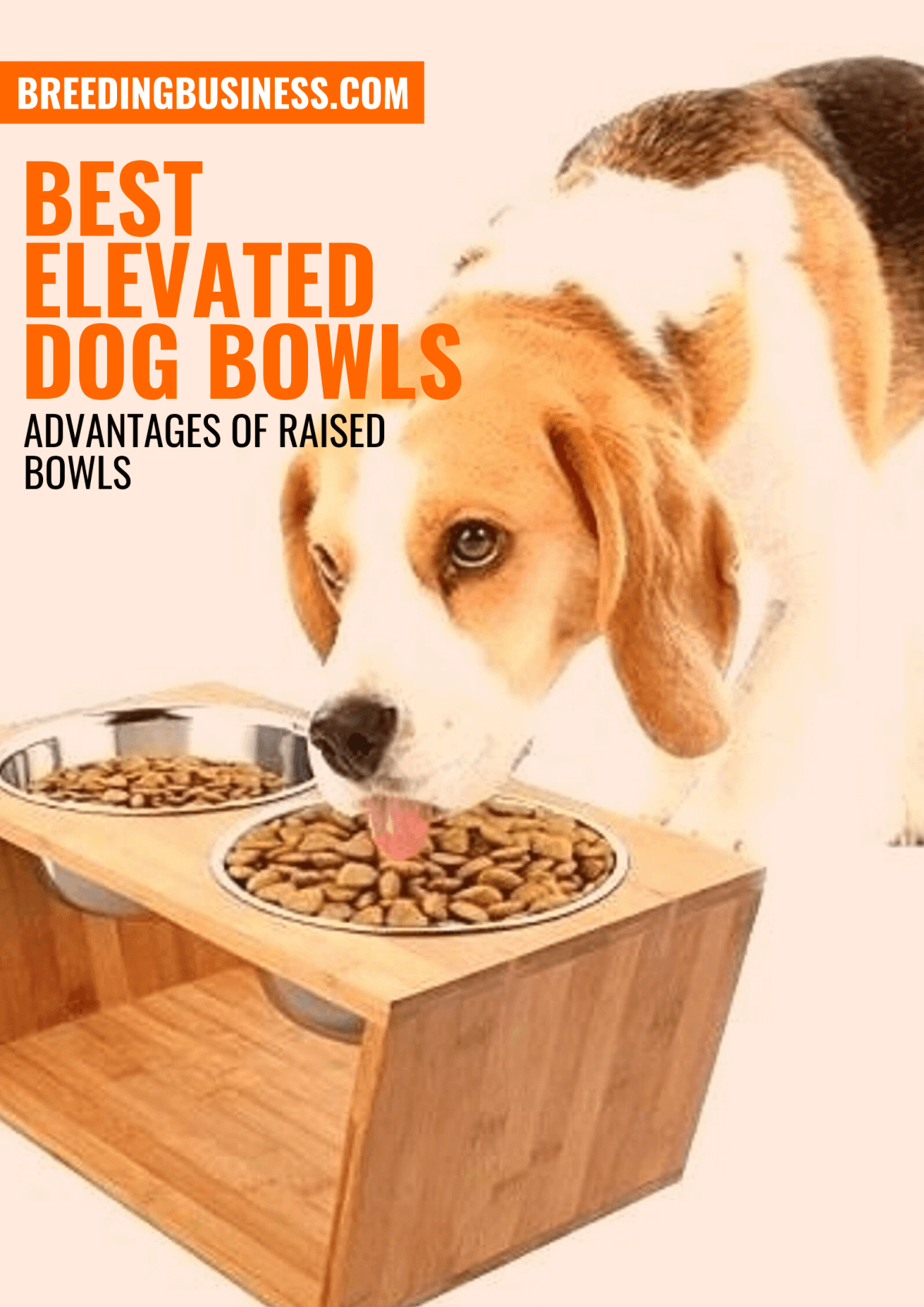 Top Raised Dog Bowls – Guide and Reviews