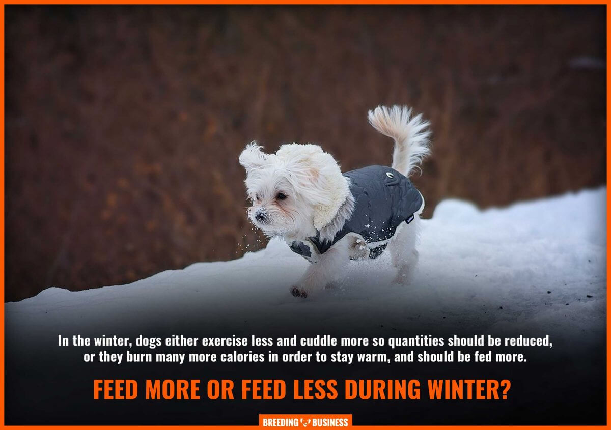 feeding dogs during winter