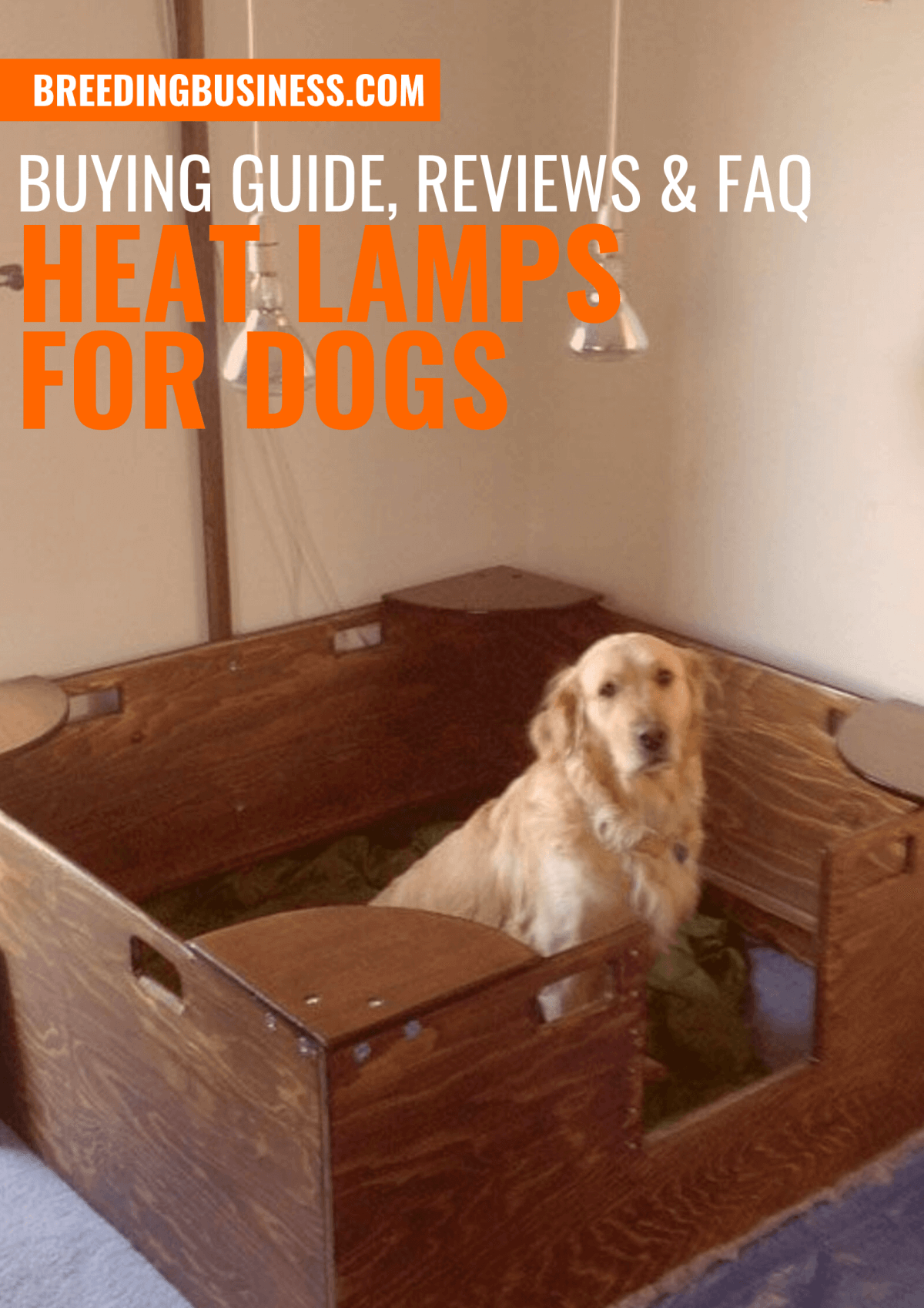 Heat Lamps for Dogs – Buying Guide, Reviews, FAQ