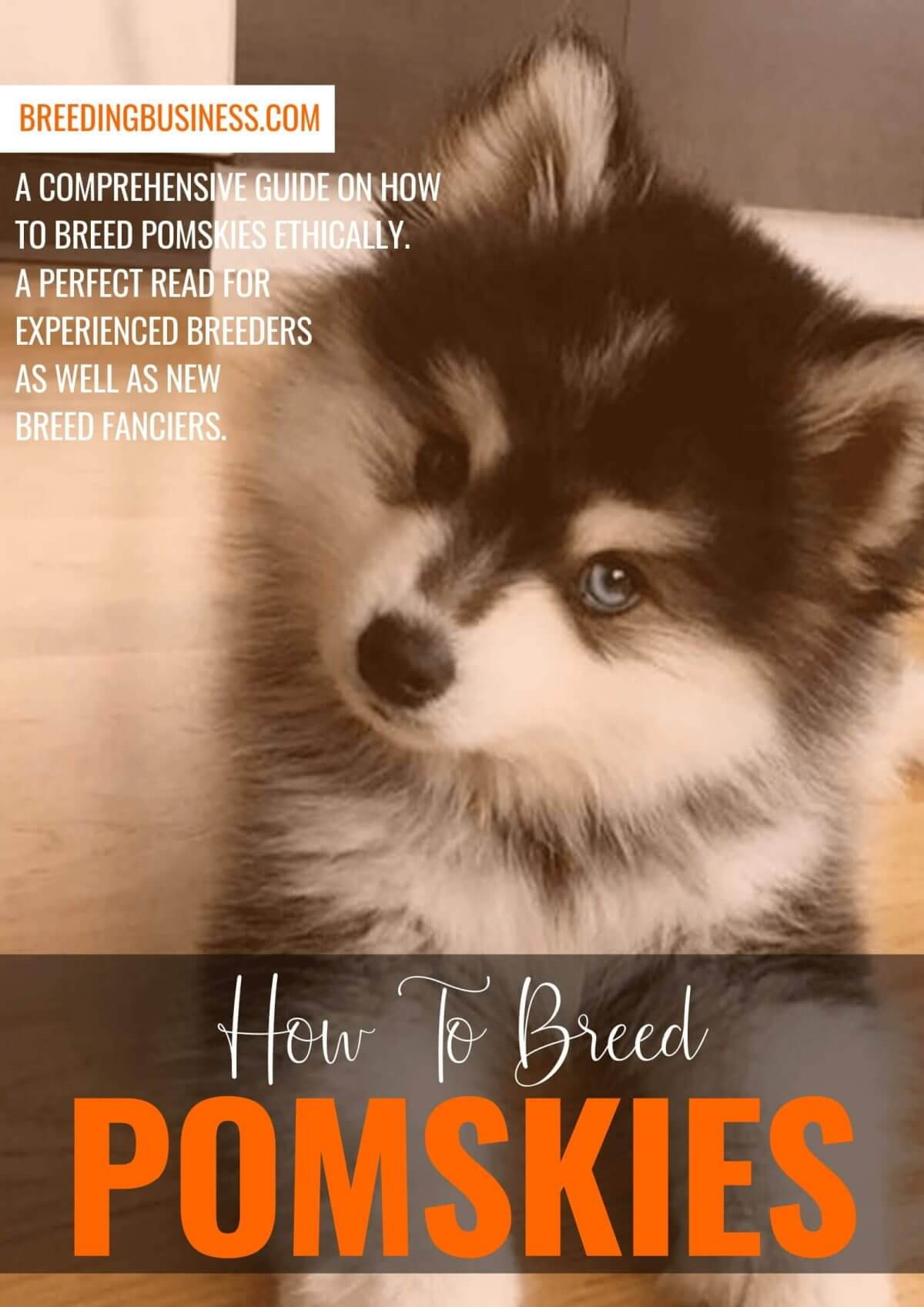 how to breed pomskies