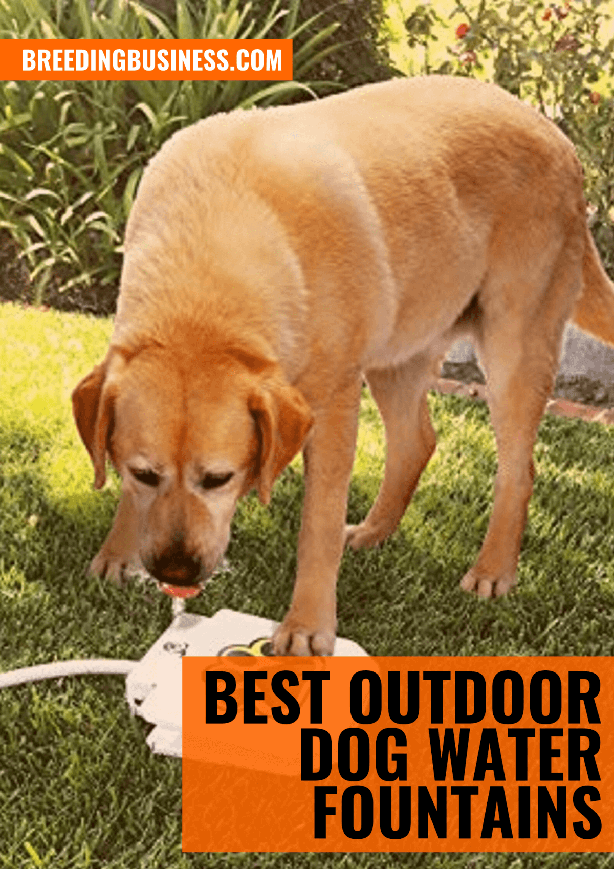 Top Outdoor Dog Water Fountains