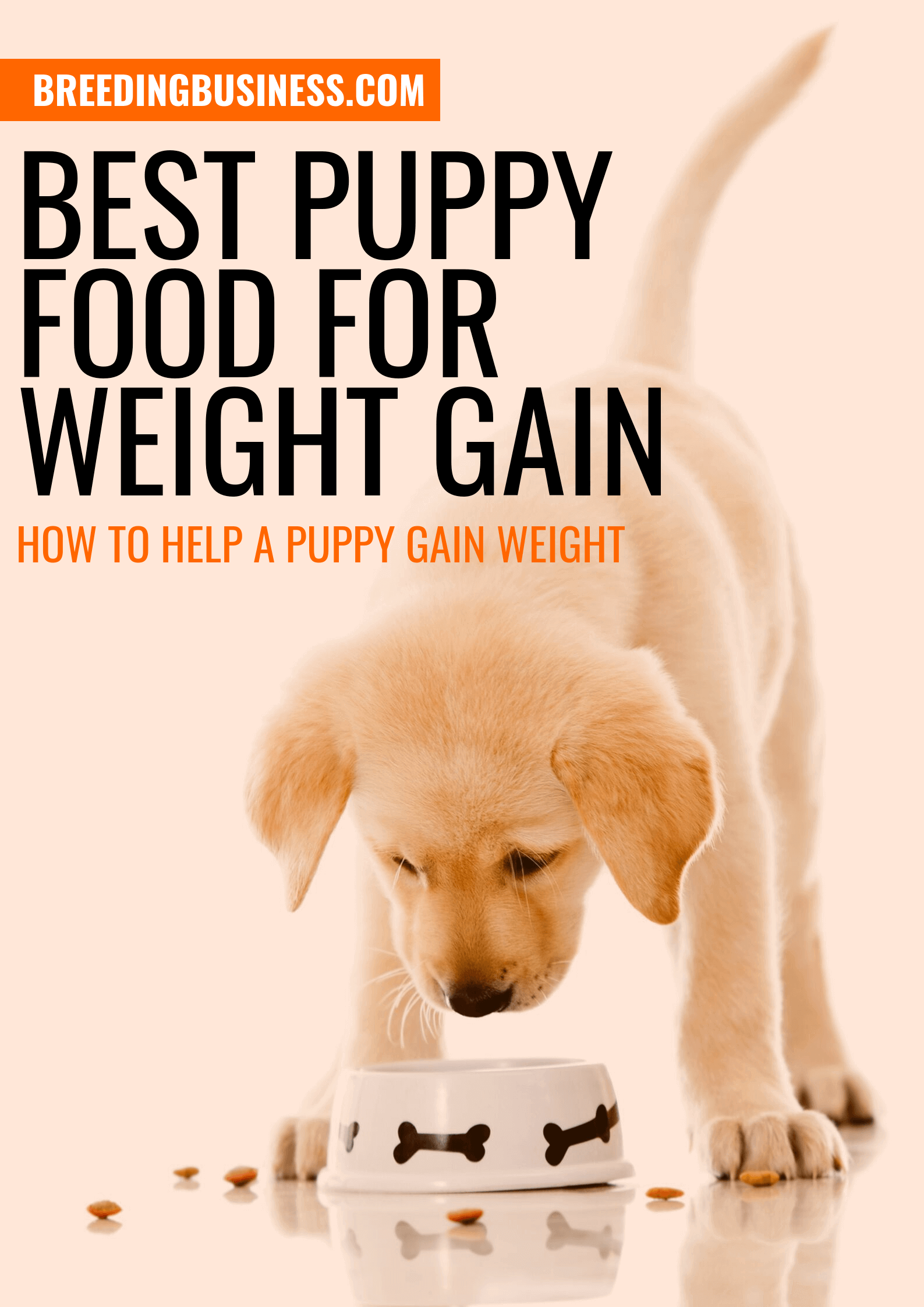 5 Best Puppy Foods for Weight Gain
