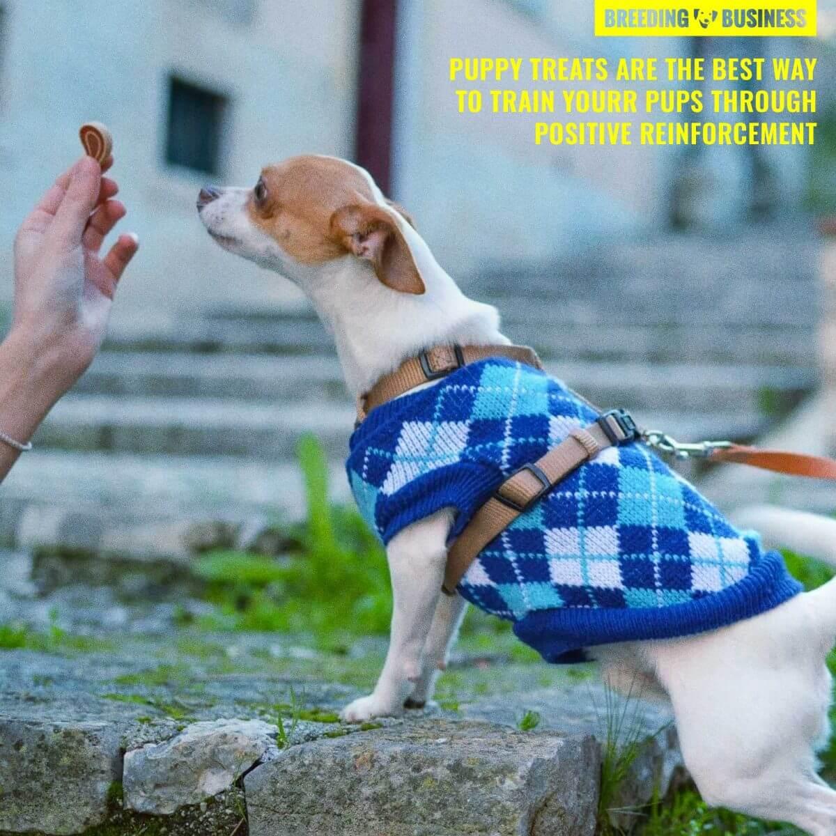 puppy treats for positive reinforcement