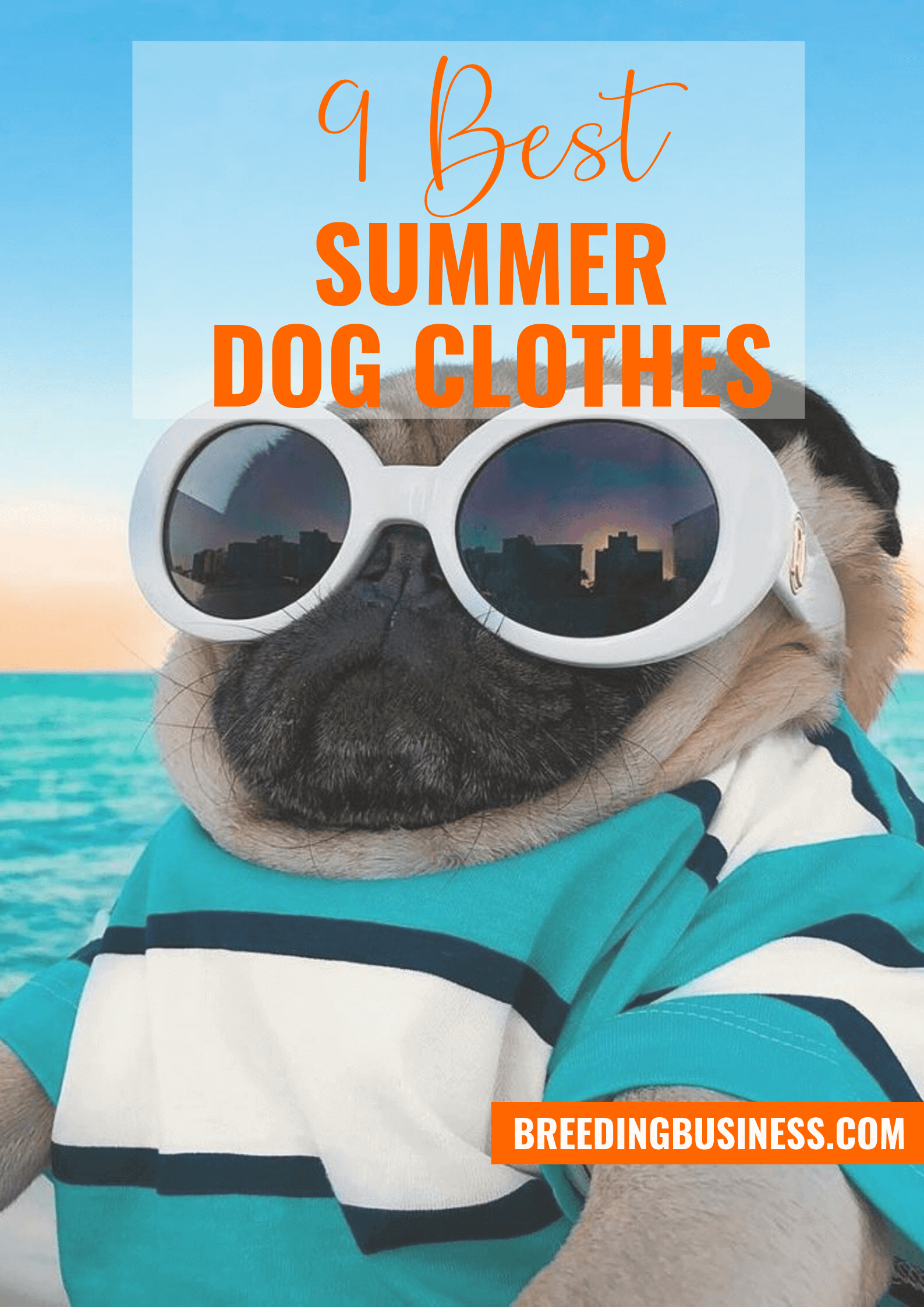 summer dog clothes