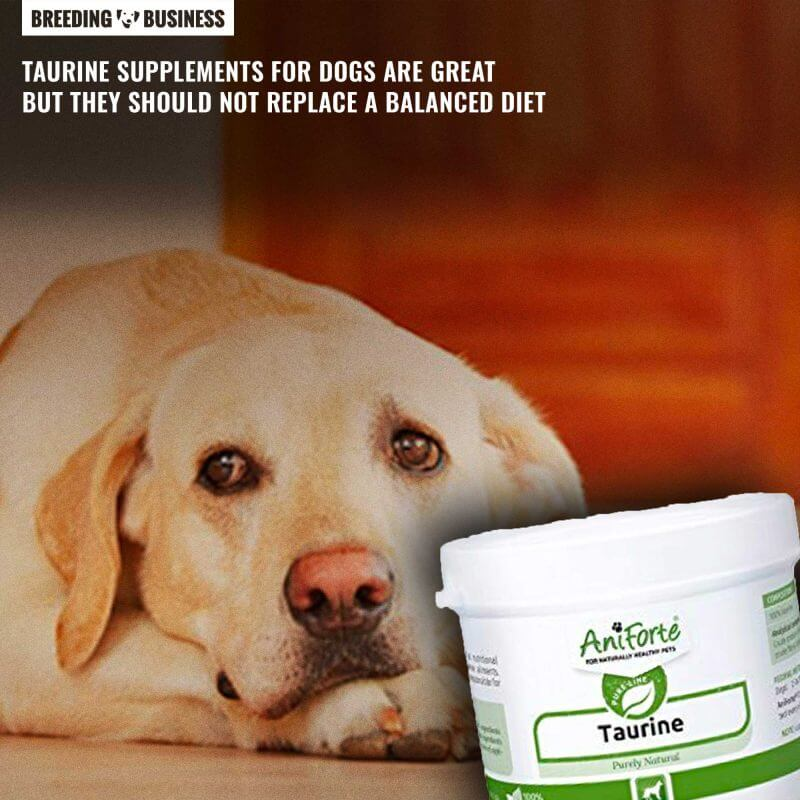 taurine supplements for dogs