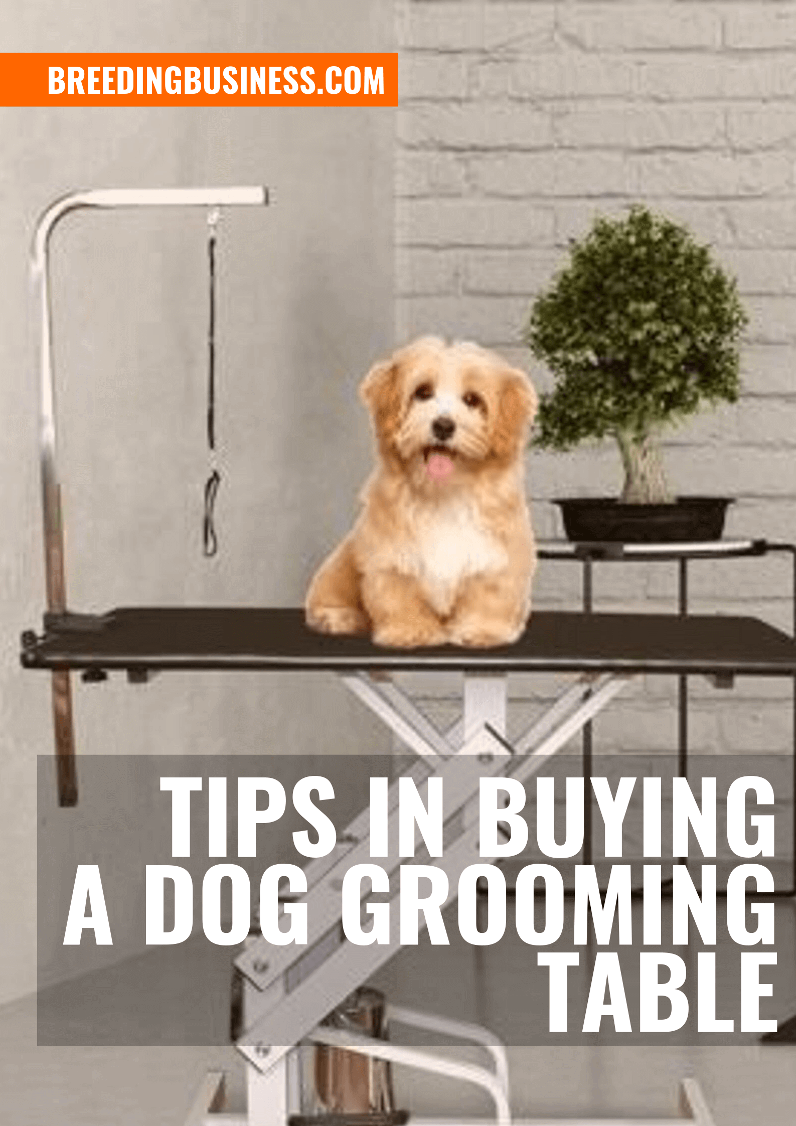 Top Tips When Buying a Dog Grooming Table