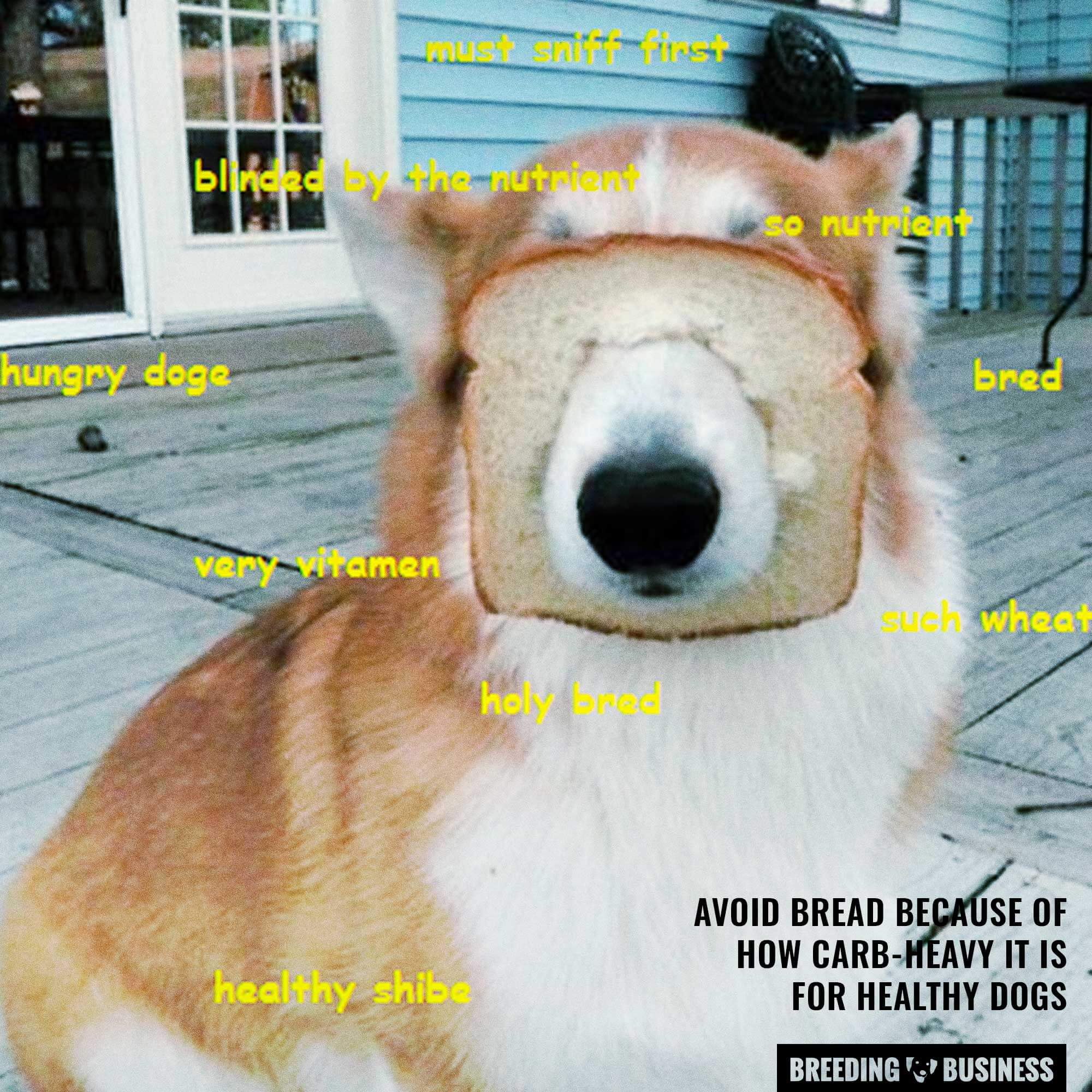 unhealthy bread for dogs
