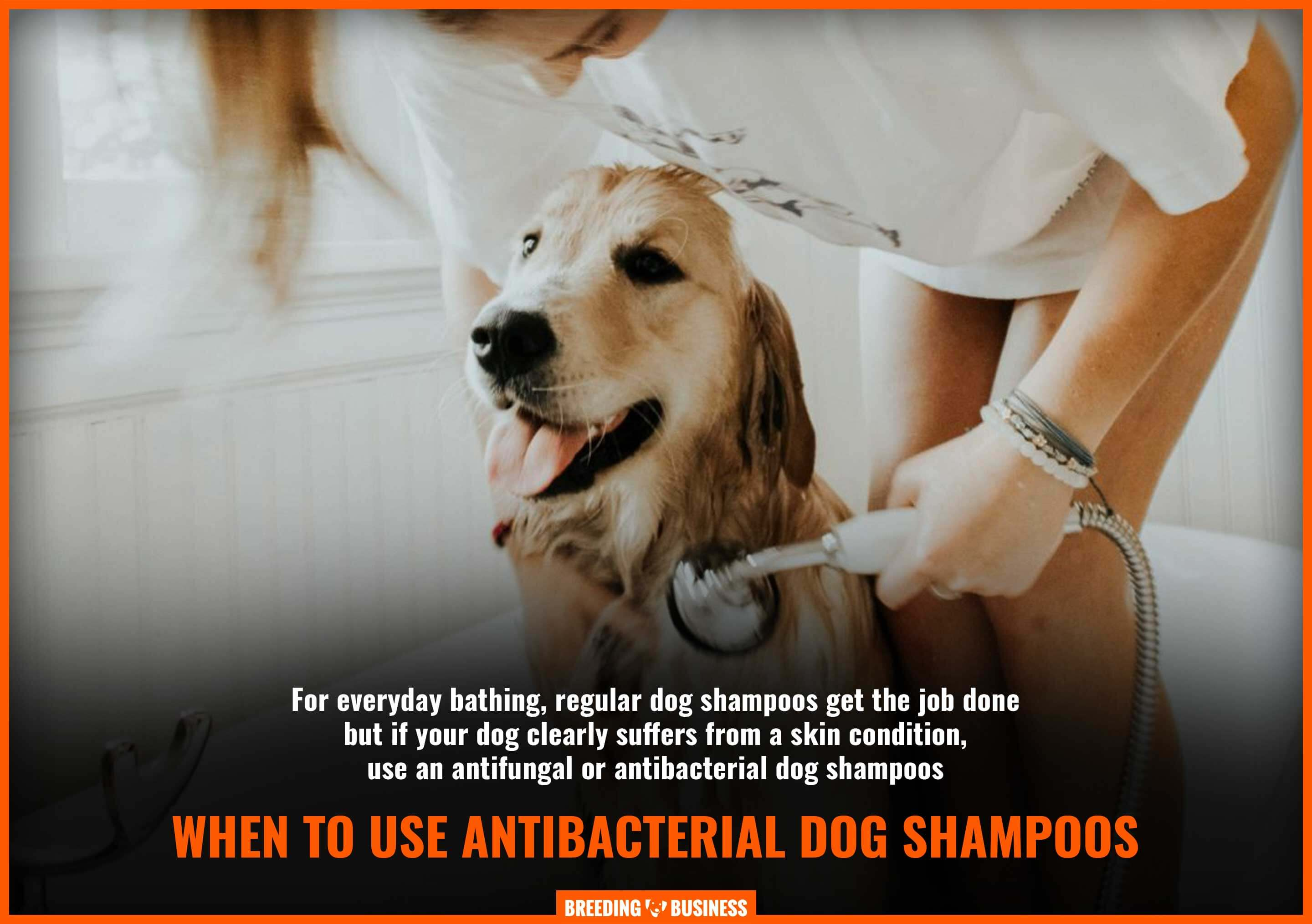using antibacterial dog shampoos