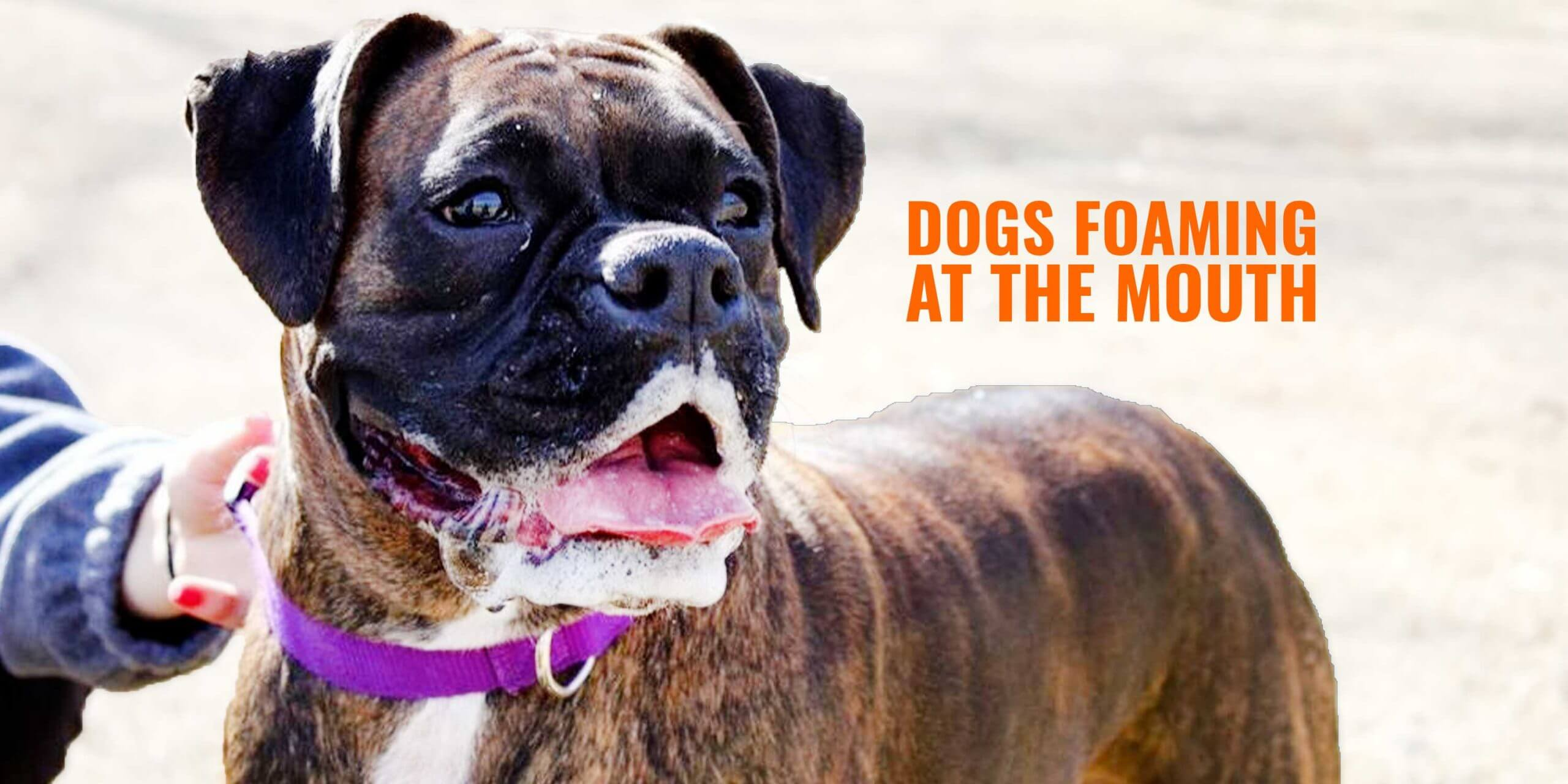 Why Do Dogs Foam at the Mouth – Reasons