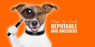 How To Find Reputable Dog Breeders