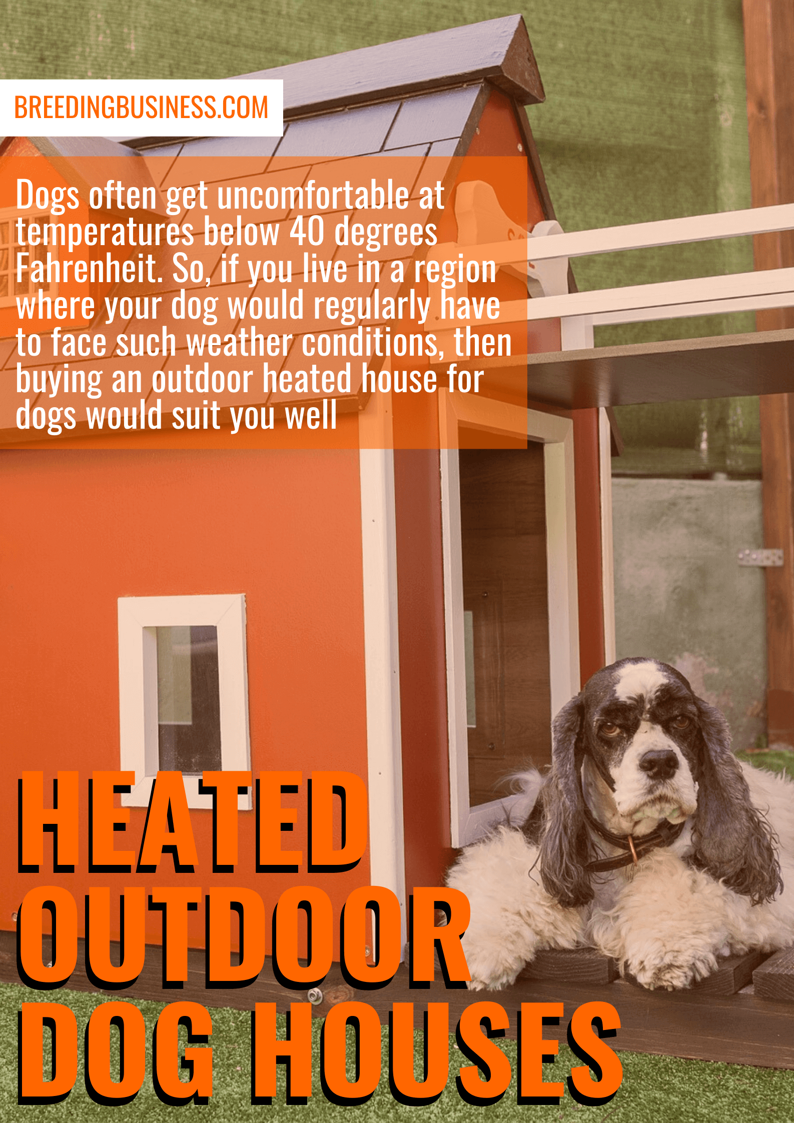 best heated outdoor dog houses (reviews)