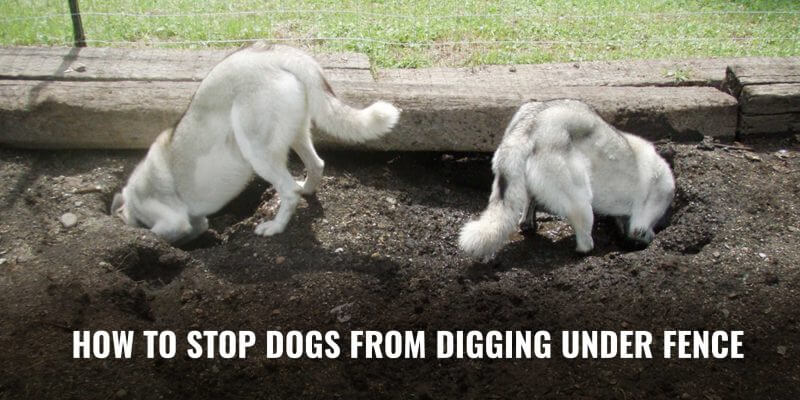 How To Stop Dogs From Digging Under Fence?