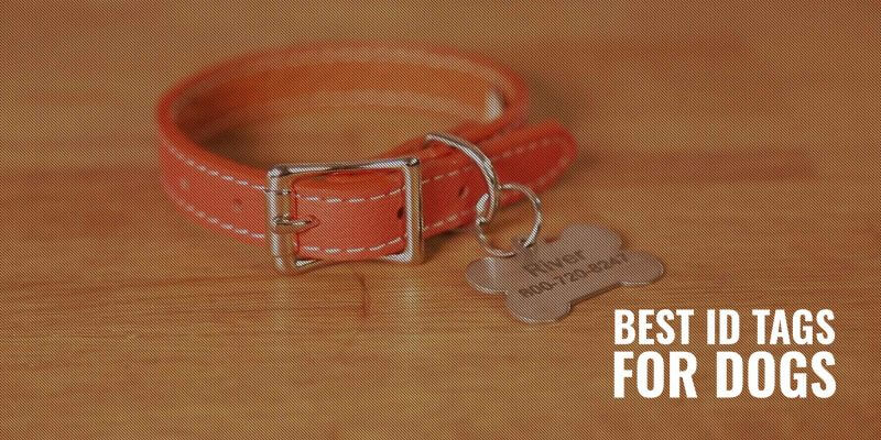 best id tags for dogs