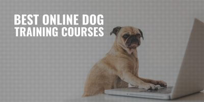 best online dog training courses