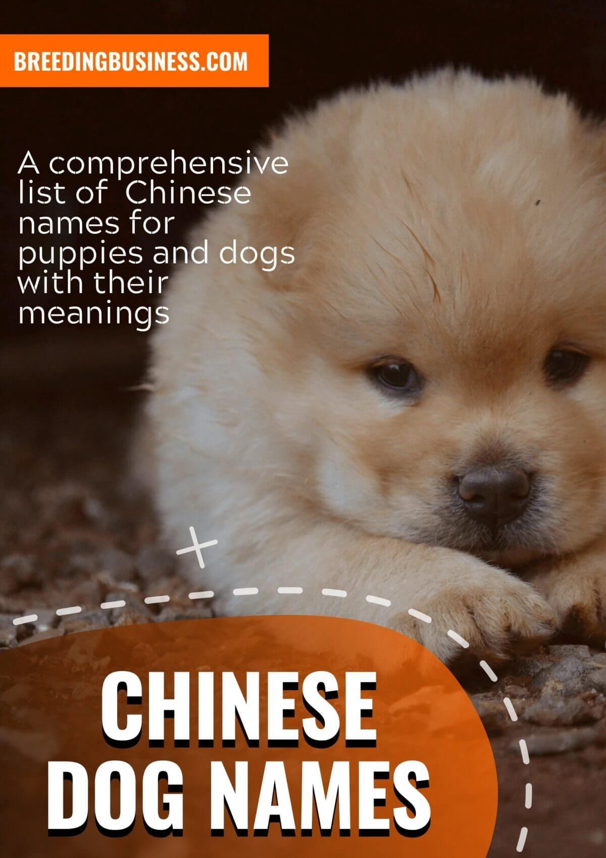 chinese dog names