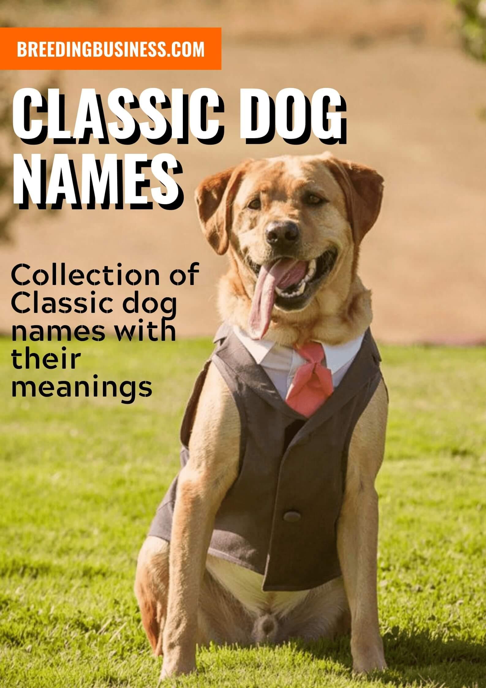 Classic Dog Names