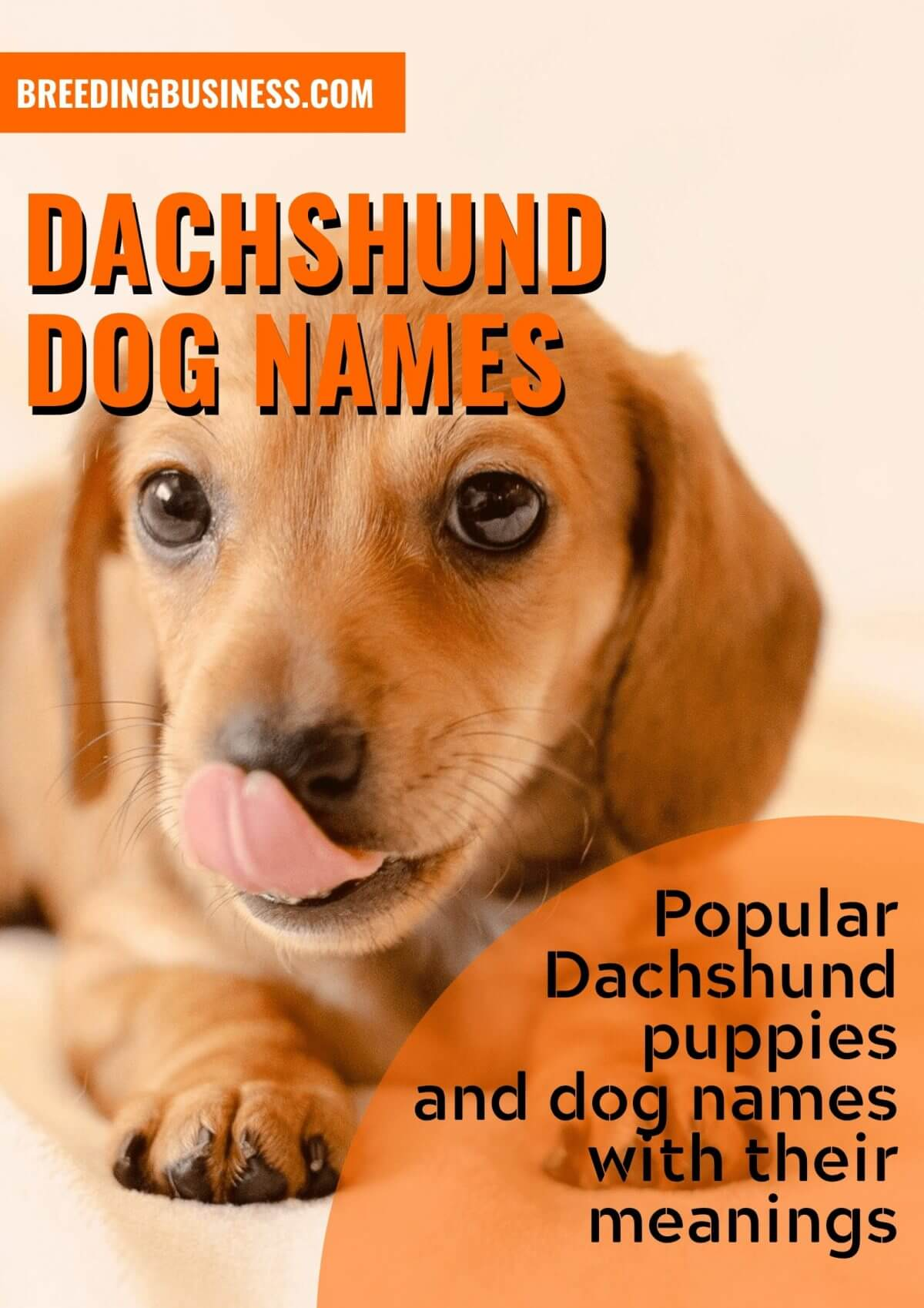 150 Dachshund Dog Names Perfect Name Ideas For Sausage Dogs