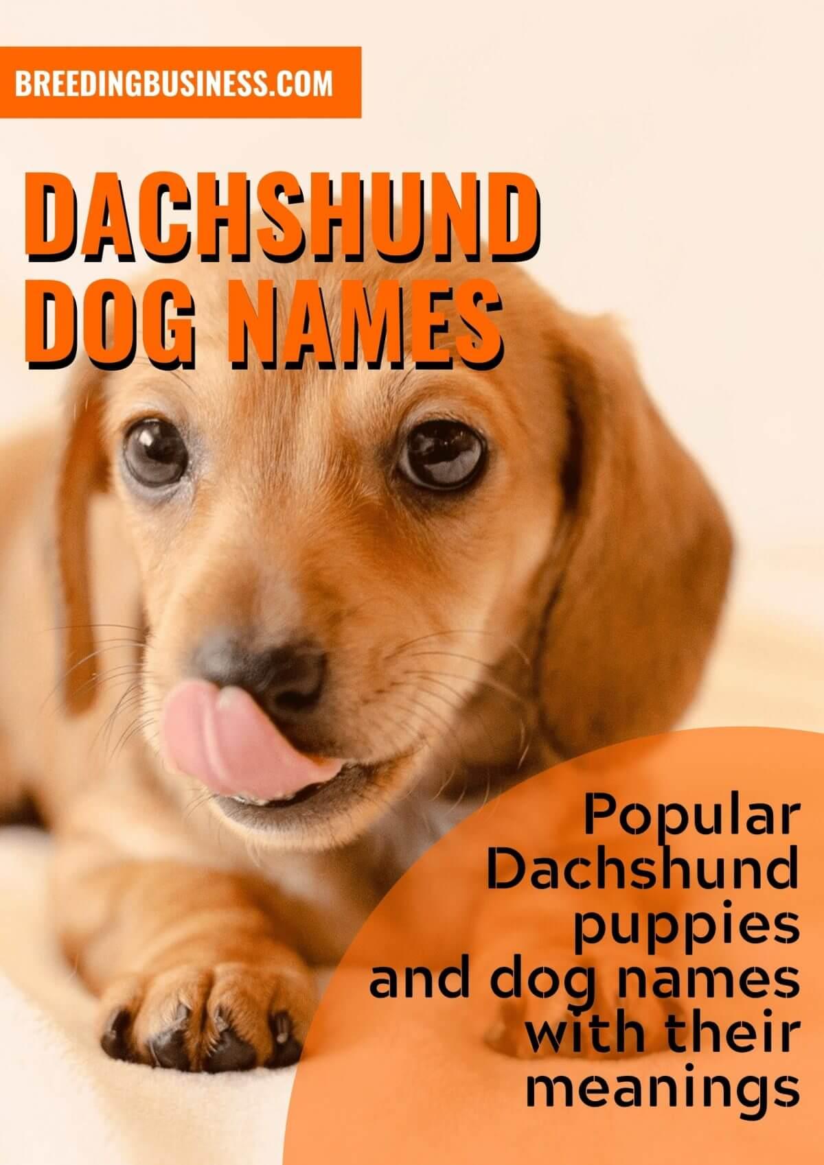 150+ Dachshund Puppy Names!