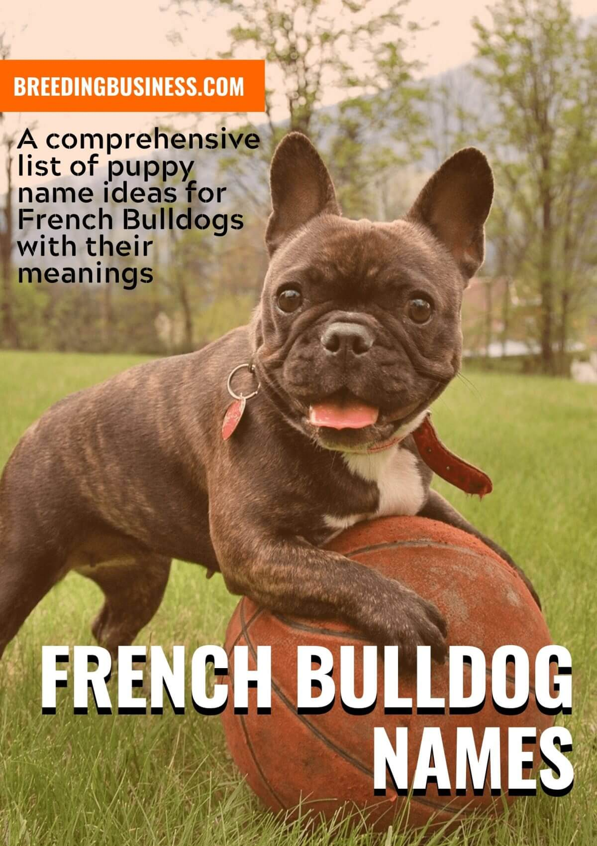 180 French Bulldog Names Cool Names For Male Female Frenchies