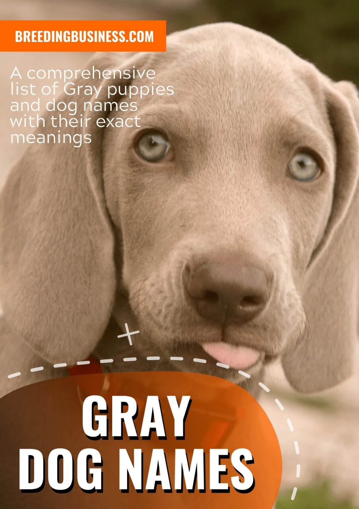 best gray dog names