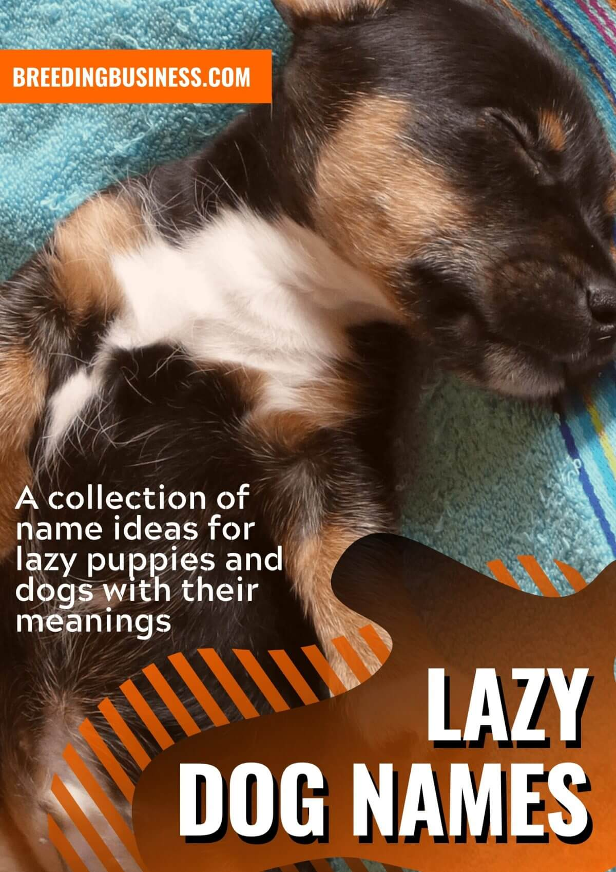 100 Lazy Dog Names Top Name Ideas For Lazy Low Energy Puppies