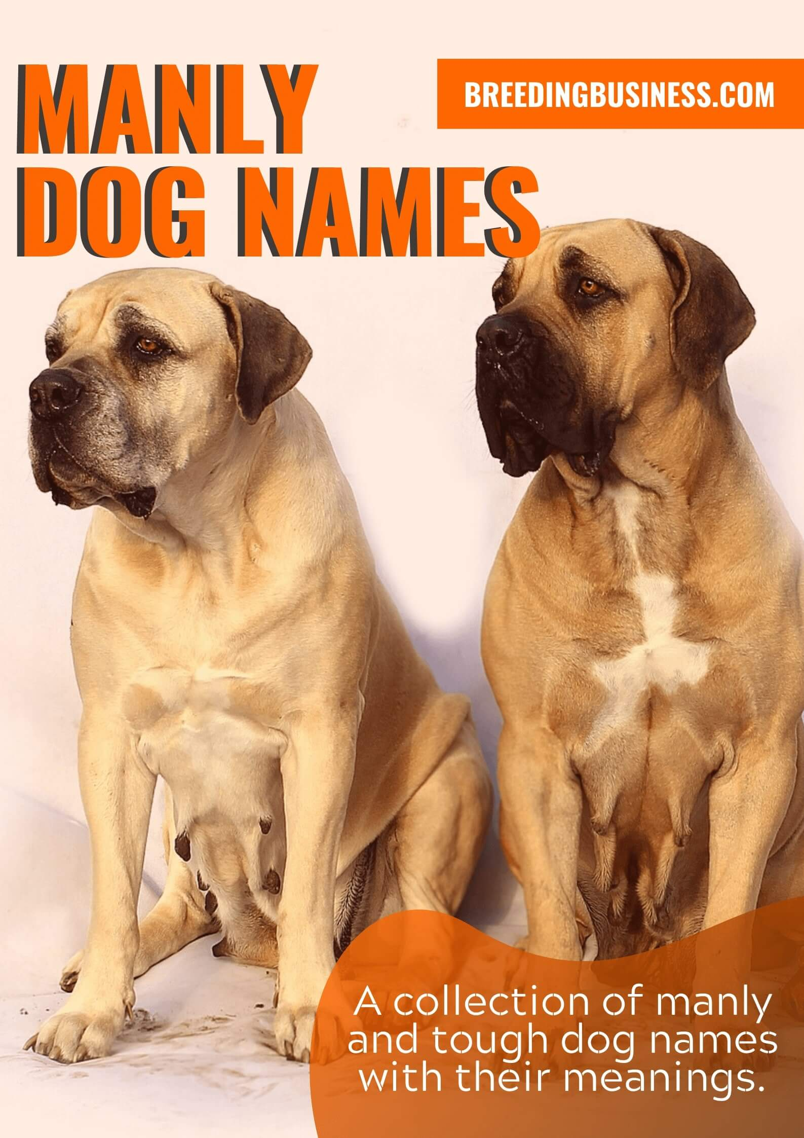 Manly Dog Names