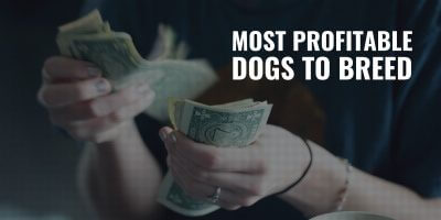 most profitable dog breeds