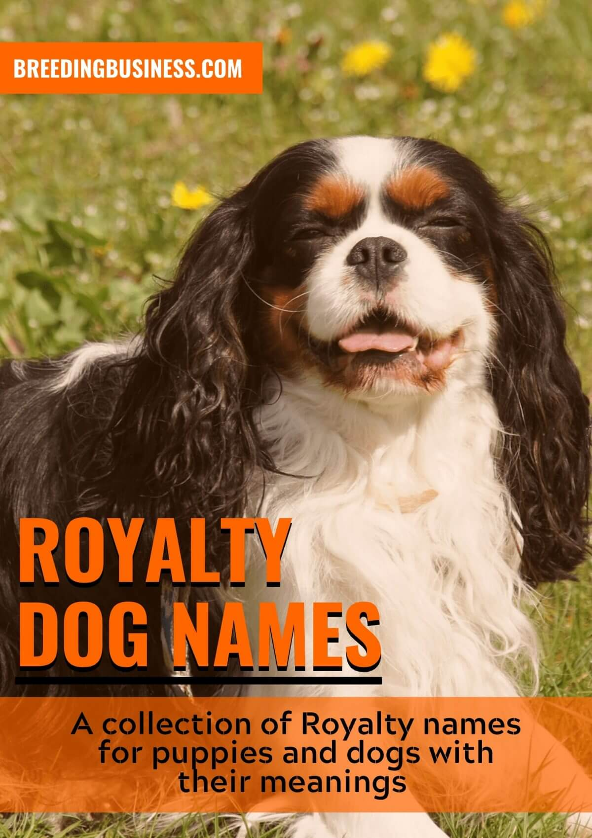 best royal dog names